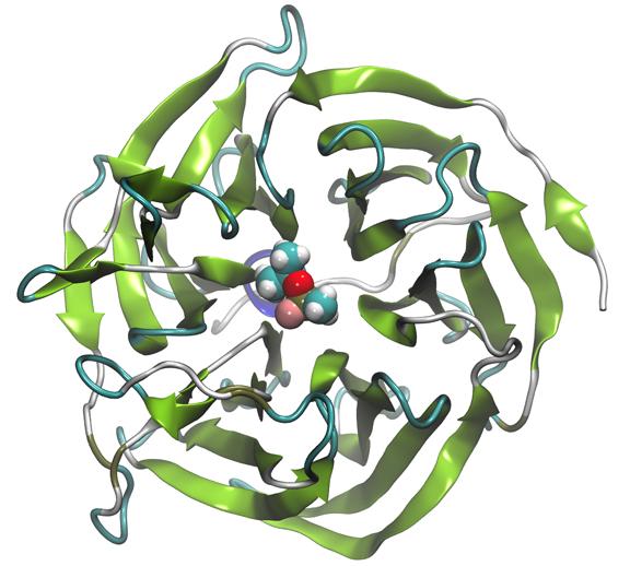 enzyme-figure