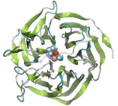 Nerve agent sarin bound to bioscavenger enzyme.