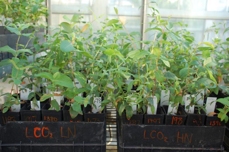 Experimental greenhouse setup