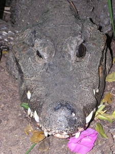 Crocodile with flowers