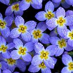 wildflower_featured150