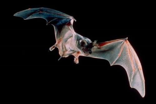 bats_mccracken_close-up