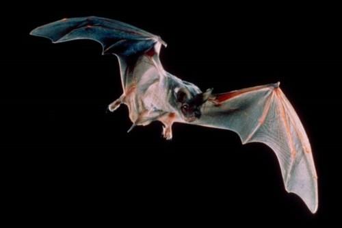 bats_mccracken_close-up