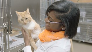 A UT student volunteers at Young-Williams Animal Center.