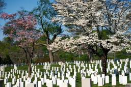 Knoxville National Cemetery