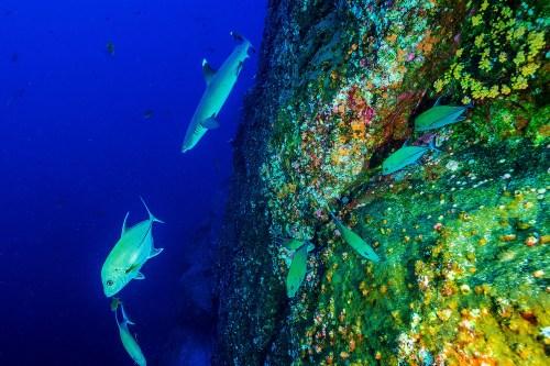 Reef fish 1500x1000