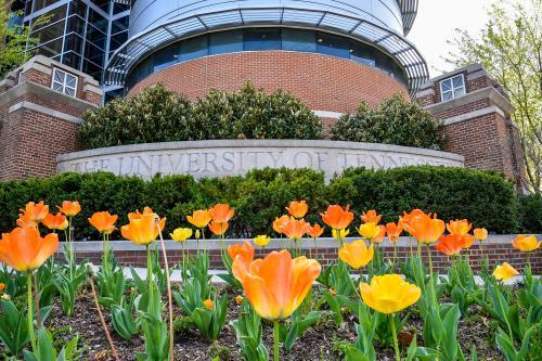 168026_2018 04 11 spring tulips blossoms 41224 EC0688