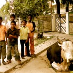 Indian boys and cattle