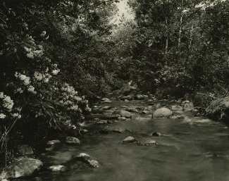 """""""Mountain Laurel,"""" an image from the Thompson Brothers Digital Photograph Collection"""