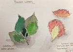 Nature Journaling with Dorothy Steinicke