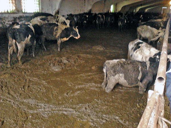 Почему тонет кал — Боль в кишках