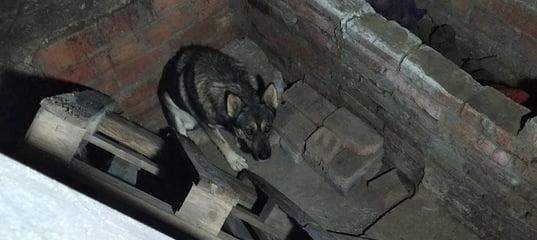 Спасатели достали пса из погреба в Марксовском районе - новости подлесное