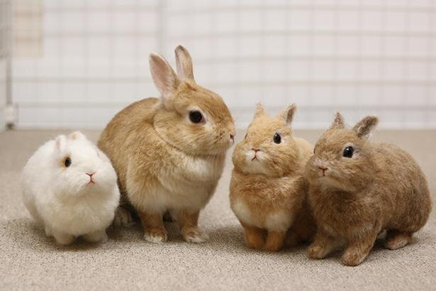 どっちが本物?ウサギのぴこちゃんとリアルすぎるフェルトアートの共演が話題|ウォーカープラス