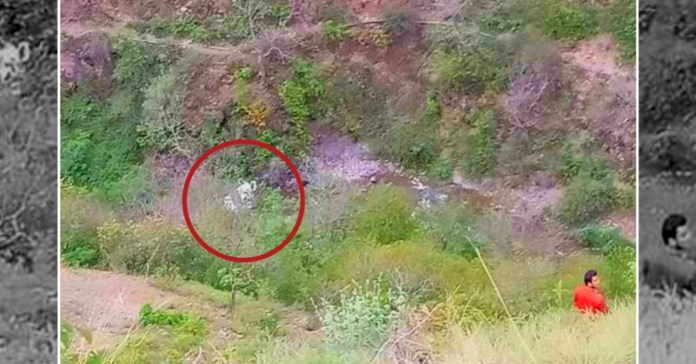 Himachal Accident: 3 died inducing pregnant woman in Mandi District as car fell into 400 m gorge