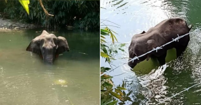 Pregnant Elephant : One accused arrested, in connection with death of the pregnant elephant