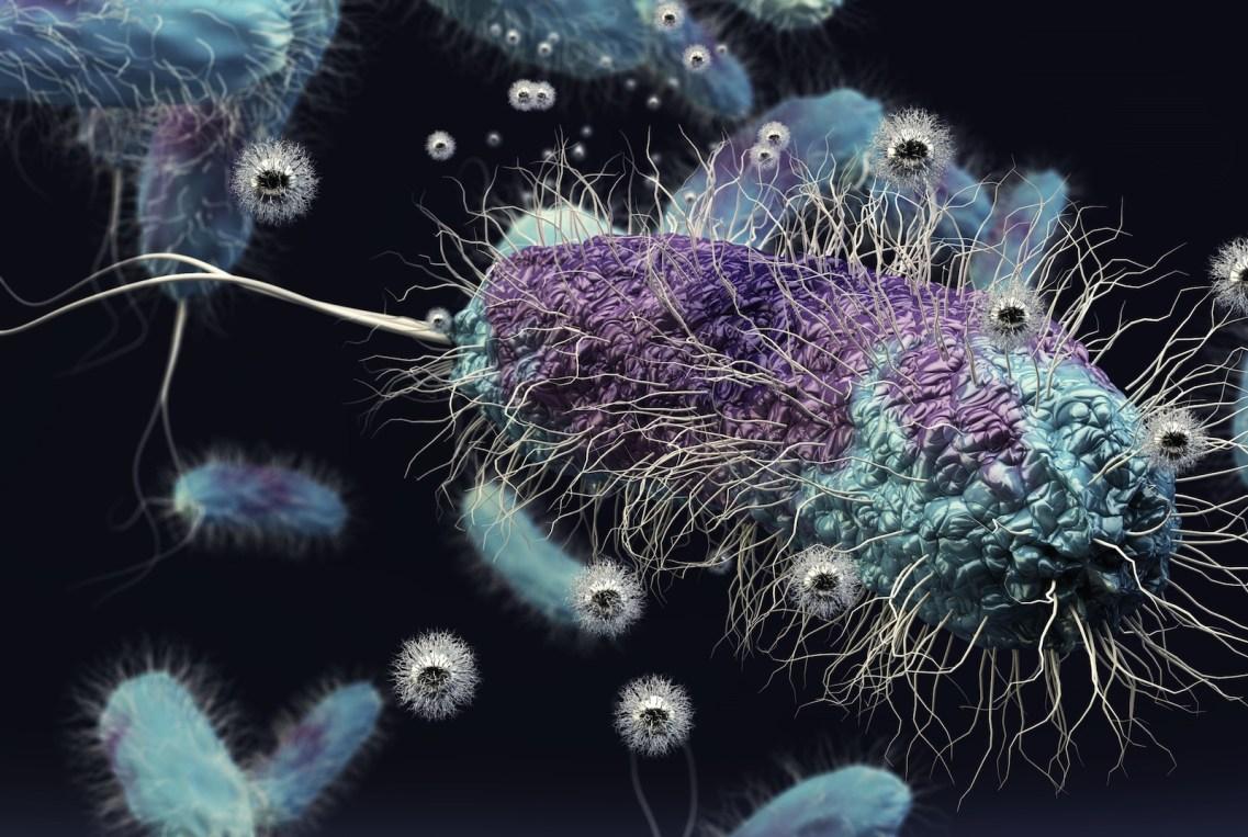 https://i0.wp.com/news.wisc.edu/content/uploads/2016/02/Soil-bacterium-cropped.jpg?resize=1137%2C763