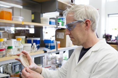 Termite gut holds a secret to breaking down plant biomass