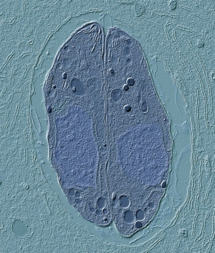 Photo: A cell.
