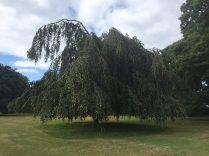 Acton Park 2
