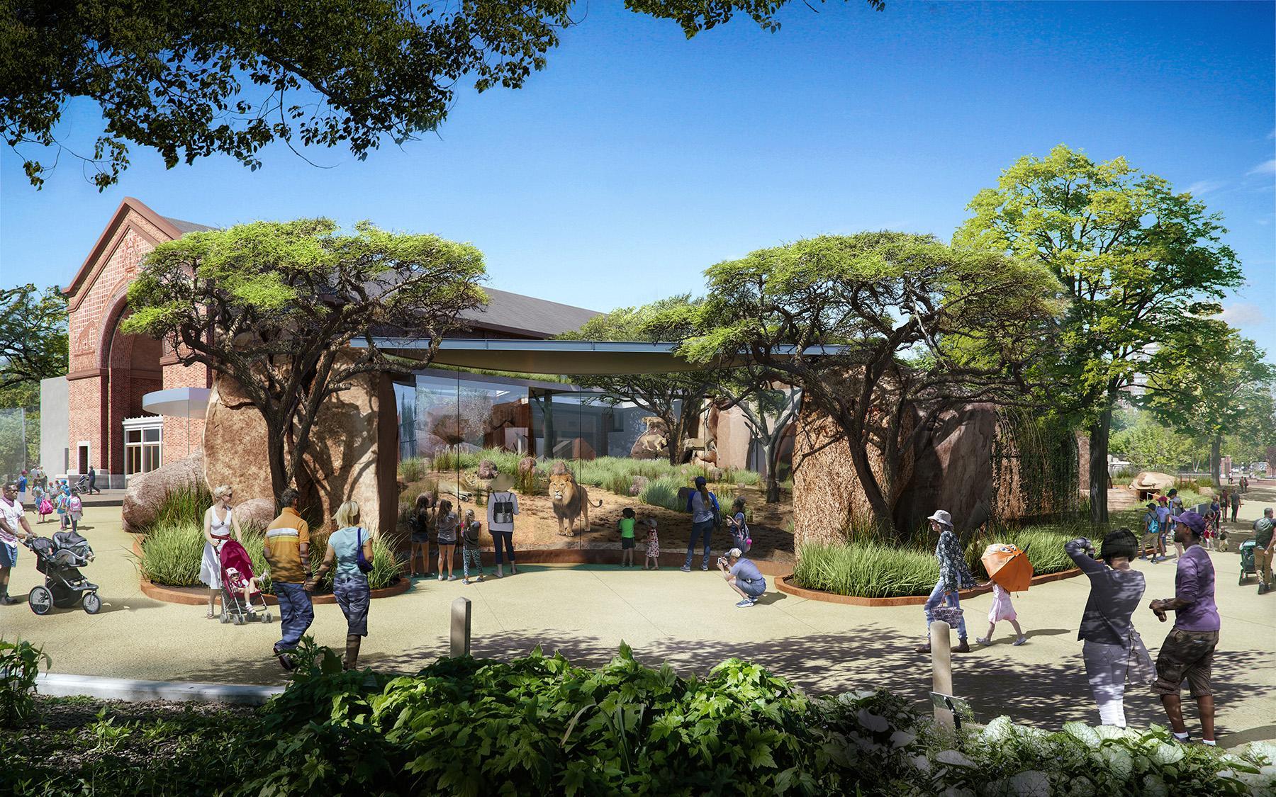 Lincoln Park Zoo Unveils Plans For New 35 Million Lion
