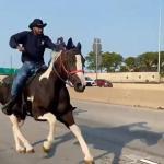 Prosecutors Horse Ridden By Dreadhead Cowboy On Dan Ryan May Not Survive Chicago News Wttw
