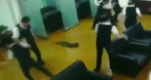 Python fall