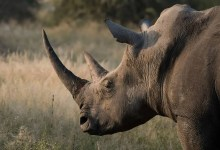 Photo of Tragedy at Tshwane's reserve as rhinos get electrocuted