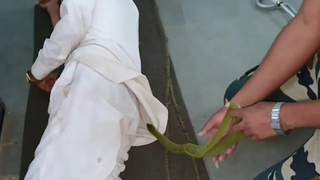 Snake rescued from a shirt