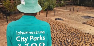 Johannesburg City Parks and Zoo (JCPZ)