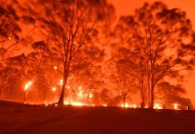 Bush fires