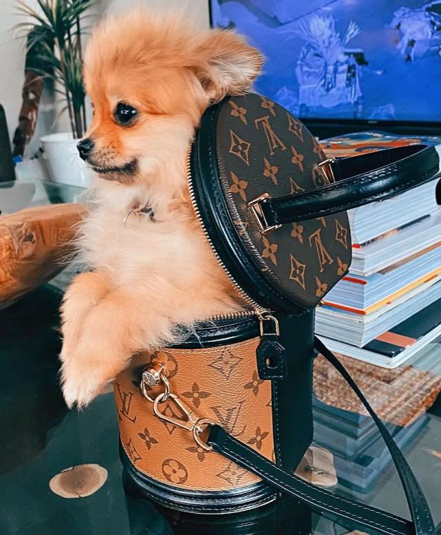 Boity Thulo dog