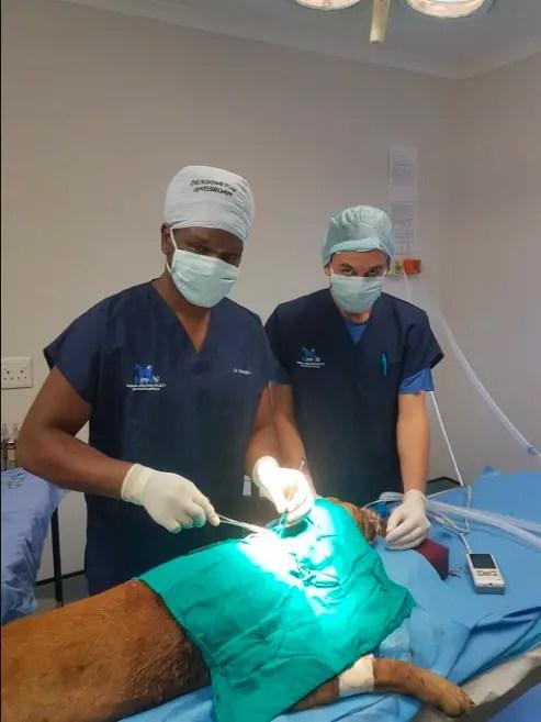 Bruno surgery