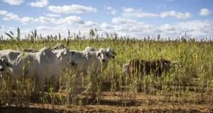 African Farmers Association