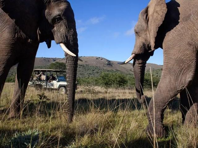 Elephants SA