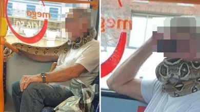 Drama as man uses Snake as face mask in the bus