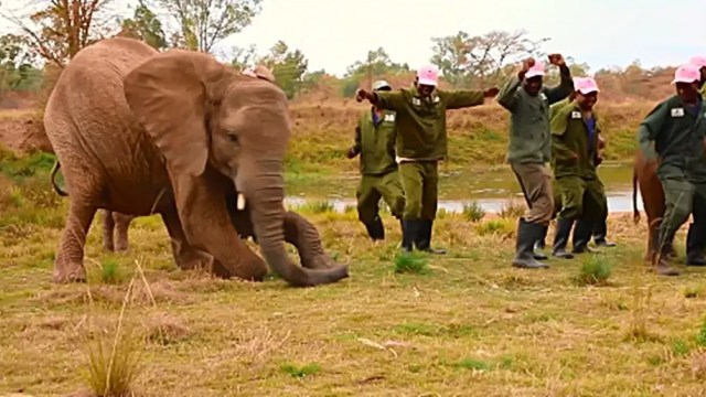 elephants join Jerusalema dance challenge