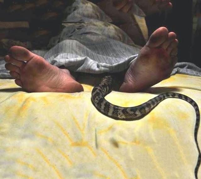 snake in blanket Mamlambo snake