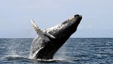 Algoa Bay Whale Heritage Site