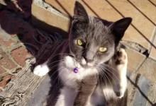 Ash cat