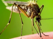 Malaria parasite hides in human blood