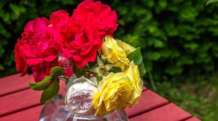 Date, Wishes Images, Quotes, Status, Importance and significance of each rose color
