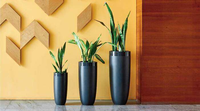 Use indoor flower pots to spruce up your home decor; here's how