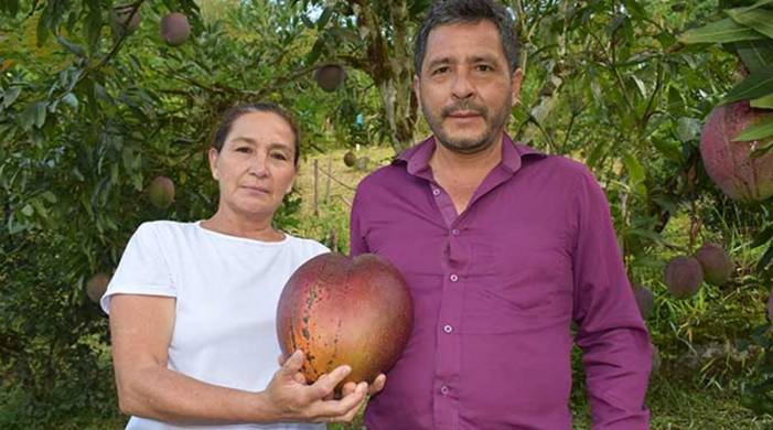 Colombian farmers win Guinness World Records title by growing world's heaviest mango