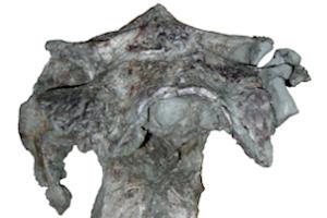 Dinosaur skull found in Spain