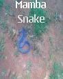 Black Momba Snake