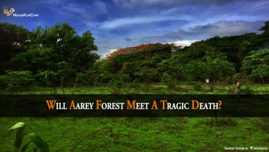 Photo of Will Aarey Forest Meet A Tragic Death?