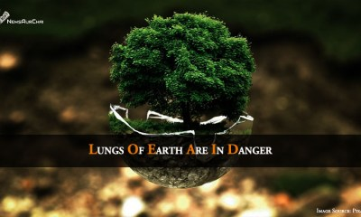Lungs Of Earth Are In Danger