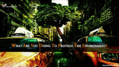 What Are You Doing To Protect The Environment?