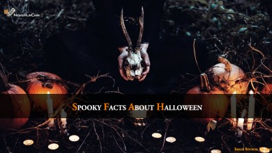 Photo of Spooky Facts About Halloween