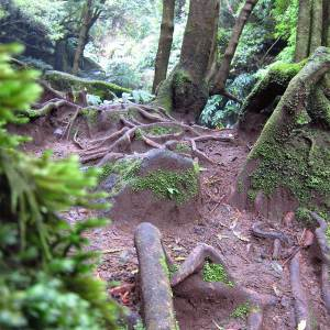 trilho Faial da Terra – Salto do Prego